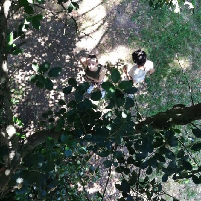 In cima all'albero